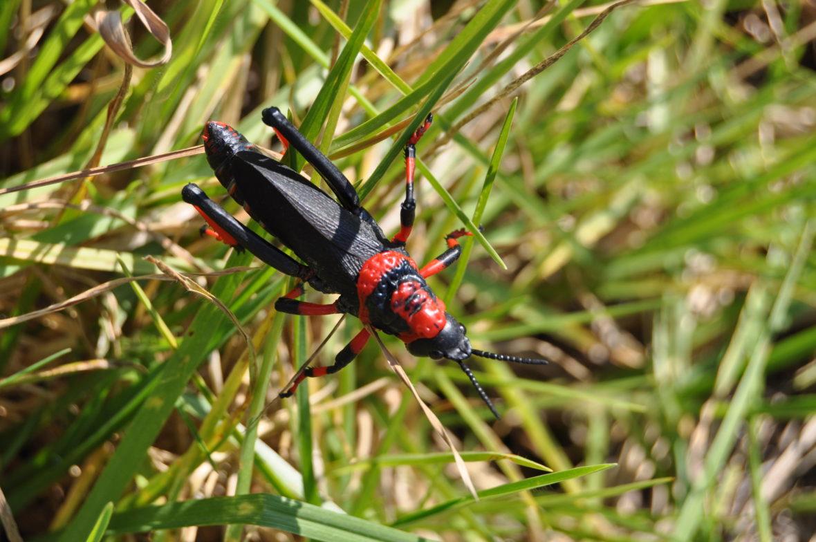 insecte afrique du sud