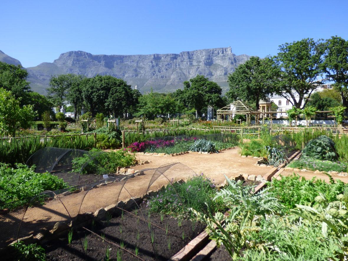 jardin afrique du sud